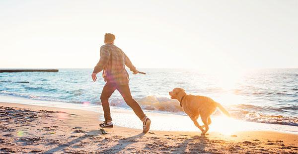 viajar com seu animal de estimação